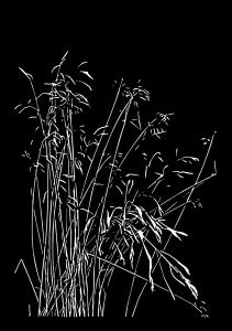 Trawy 4